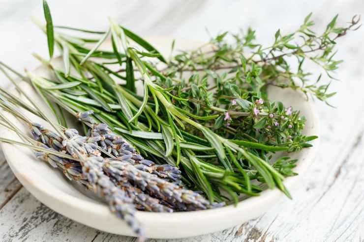Come conservare erbe spezie