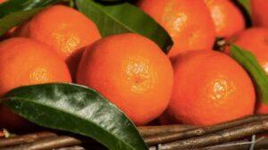 ricetta mandarino
