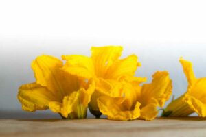 fiori zucca