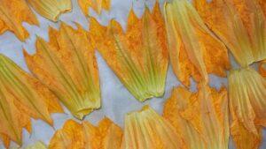 fiori di zucca pastella