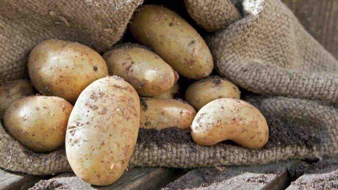 conservare patate