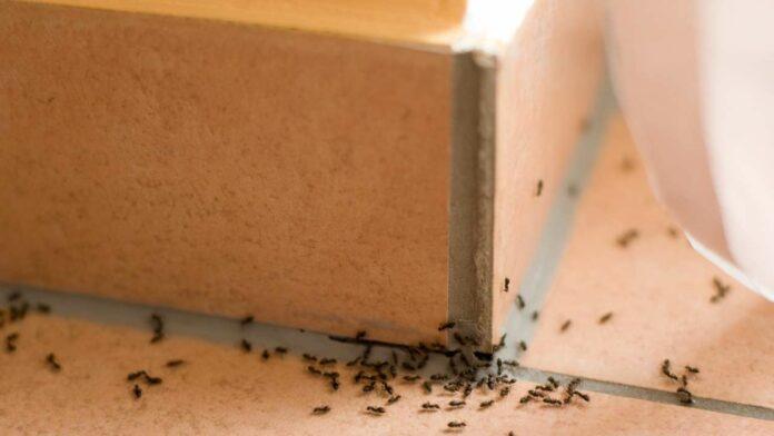 come allontanare formiche